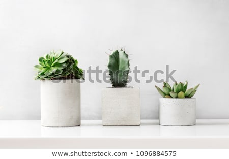 Сток-фото: цветочный · горшок · металл · старые · коричневый · стены · здании