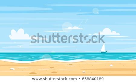 vettore · conchiglia · mare · ciottoli · realistico · tropicali - foto d'archivio © carodi