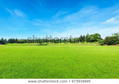 verde · frescos · hierba · cielo · azul · panorama · listo - foto stock © tungphoto