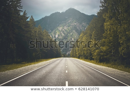 country road in forest Stock photo © Mikko