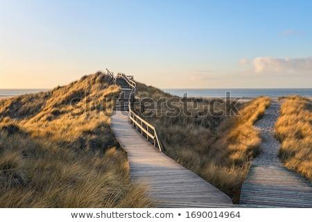 Footpath  Stock photo © inxti