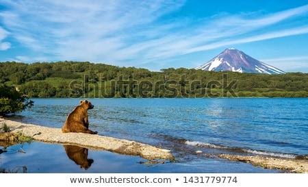 wild nature of kamchatka russia stock photo © amok