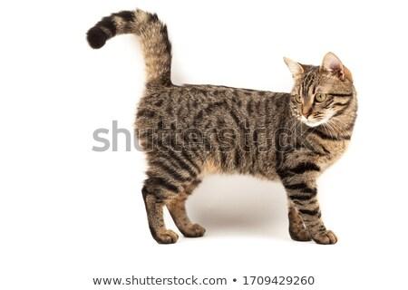 gato · fuera · blanco · bebé · feliz · ojos - foto stock © phakimata