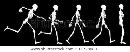 Iskelet siluet yürümek vektör görüntü poz Stok fotoğraf © Istanbul2009