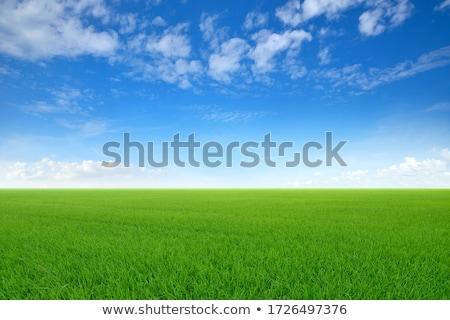 Sky and grass stock photo © dmitroza