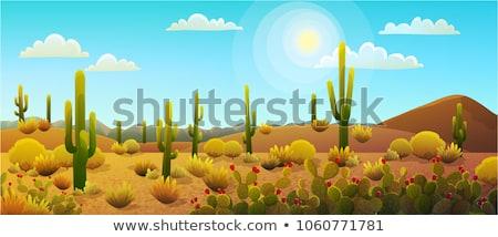 パノラマ メキシコ料理 砂漠 日没 シルエット 石 ストックフォト © liolle