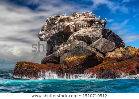 Galapagos nature and animals: Nazca boobies and sea lions on rock in ocean. Stock photo © Maridav