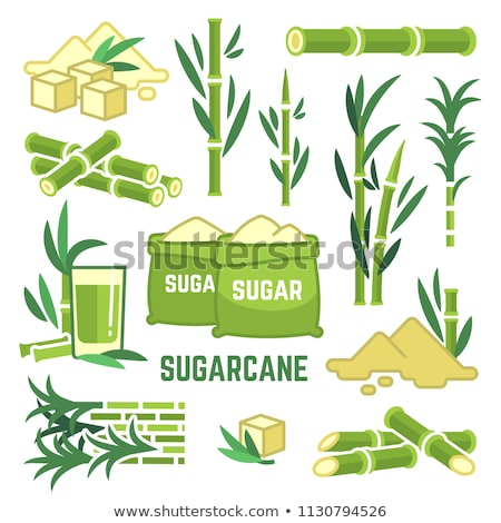 Sugar cane. Cane plant, sugarcane harvest stalk, plant and leaves, sugar ingredient stem. Vector Stock photo © Andrei_