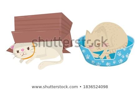 Tabby Cat, Sleeping Domestic Cat, Home Vector Stock photo © robuart