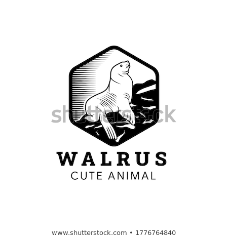 Pacific Walrus Endangered Wildlife Cartoon Drawing Stock photo © patrimonio