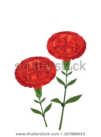 Kırmızı karanfil çiçek çiçeklenme soyut Stok fotoğraf © Anneleven