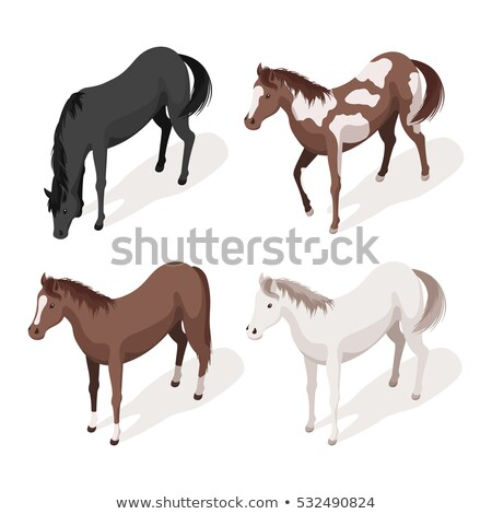 Equestrian Animal Isometric Icons Set Vector Stock photo © pikepicture