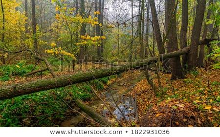 trees on ravine stock photo © smithore