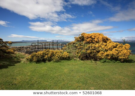 Scottish Highlands at summer time Stock photo © prill