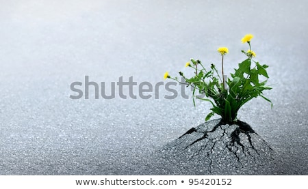 Foto stock: Life Triumphs Against All Odds