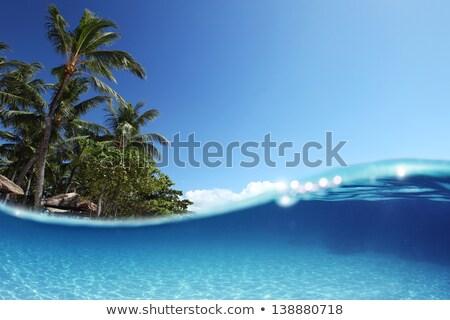 Palmiers air tropicales grand ciel bleu plage Photo stock © urbanangel