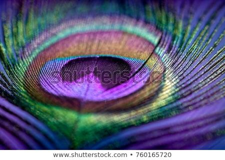 羽毛 · 反射 · 白 · 光 · 青 · マクロ - ストックフォト © kaycee