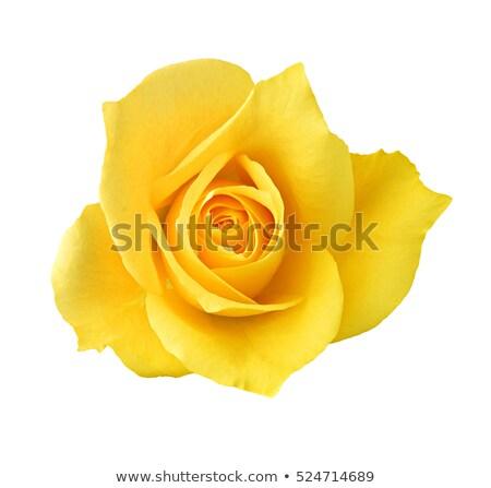 красивой · желтый · закрывается · цветок · красный · лепестков - Сток-фото © antonio-s