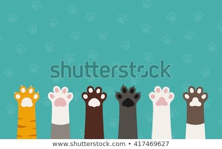 猫 · 明るい · シームレス · 背景 · 動物 · 色 - ストックフォト © UrchenkoJulia