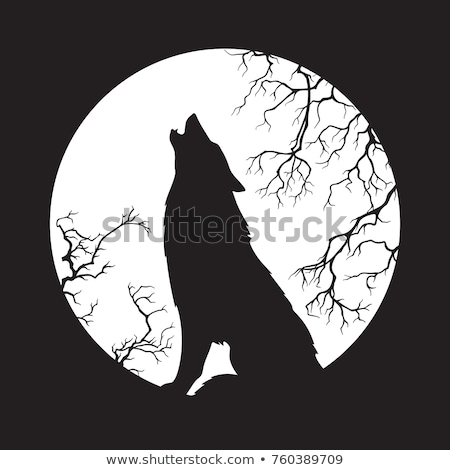 Wolf Howling in the Moonlight Stock photo © dagadu