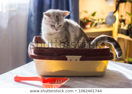 gato · vector · Cartoon · funny · mirando · momento - foto stock © pcanzo