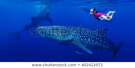 whale shark with snorkellers Stock photo © MojoJojoFoto