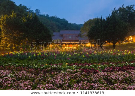 Flowers garden at angkhang nature resort chiang mai Stock photo © myimagine