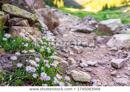 лет Полевые цветы рок желтый склон цветок Сток-фото © emattil