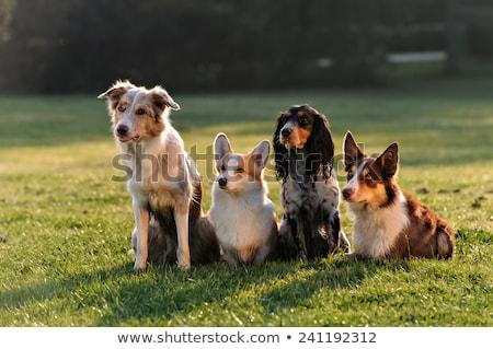 Vier honden jonge puppies eten voedsel Stockfoto © smuki