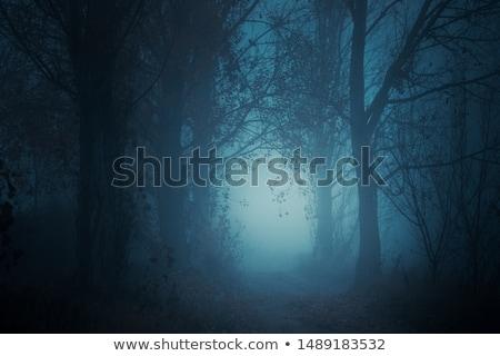 gizemli · manzara · sis · ağaçlar · orman - stok fotoğraf © bogumil