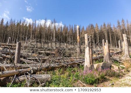 森林 破壊された 樹皮 カブトムシ 環境 ストックフォト © ondrej83