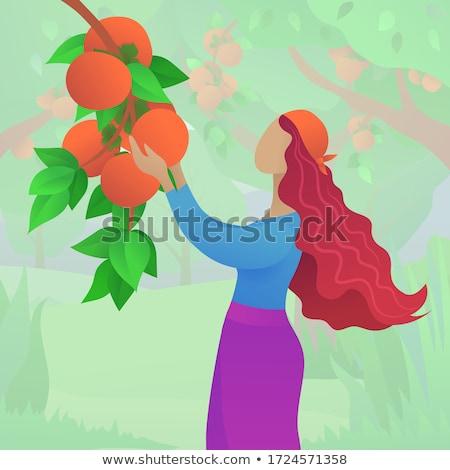 orange tree field female farmer harvest picking fruits Stock photo © lunamarina