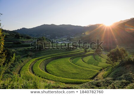 Granja terraza campo de arroz pueblo Tailandia casa Foto stock © smithore