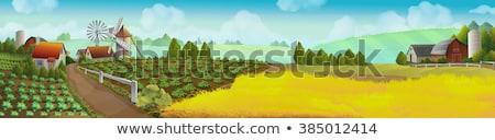 идиллический фермы пейзаж Blue Sky зеленый полях Сток-фото © c-foto
