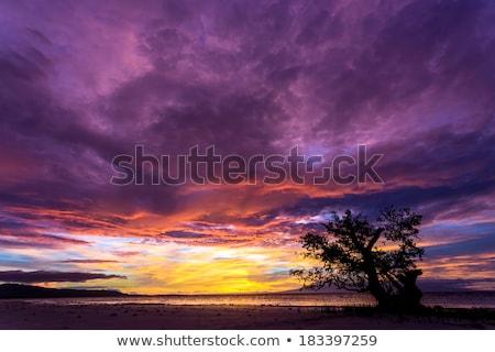 dramatik · ateşli · turuncu · gün · batımı · Filipinler · ağaç - stok fotoğraf © smithore