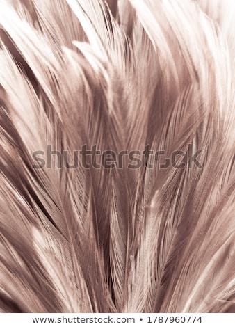 Braun Feder weiß Stock foto © devon