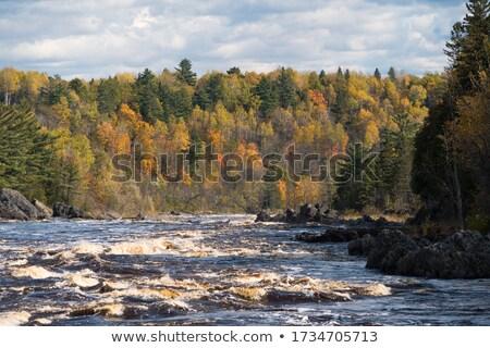 реке · береза · деревья · дерево · трава · природы - Сток-фото © wildnerdpix