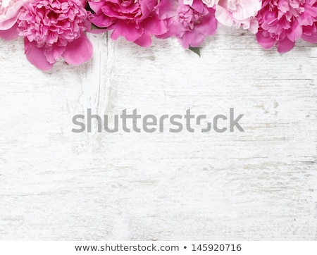 Magenta textura pared naturaleza Foto stock © Melpomene