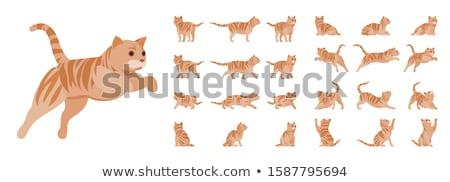 Narancs áll fehér kék fiatal macskák Stock fotó © dnsphotography