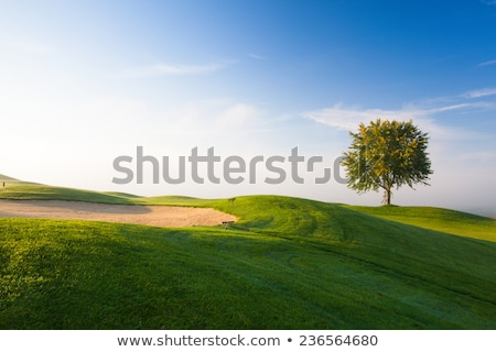 Mistig ochtend lege golfbaan boom golf Stockfoto © CaptureLight