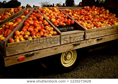 An Apple Orchard Yields Fresh Fruit Washington State Stock photo © cboswell