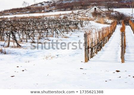 Inverno Itália comida vinho paisagem campo Foto stock © tang90246