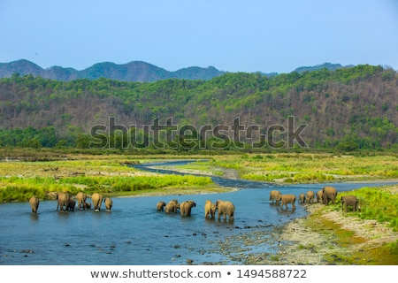 Elephants Crossing River Stock photo © JFJacobsz