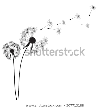 Música diente de león vector de la flor flor vuelo notas musicales Foto stock © beaubelle