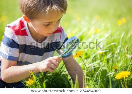 Stock fotó: Fiú · katicabogár · legelő · pitypang · mosoly · fű