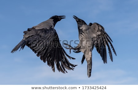 Gökyüzü güzel hayvan kuş mavi grup Stok fotoğraf © jonnysek