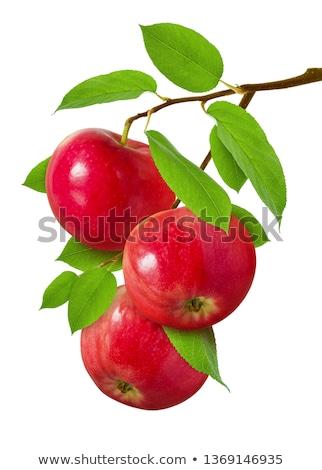 három · piros · almák · fa · rózsás · faág - stock fotó © stevanovicigor