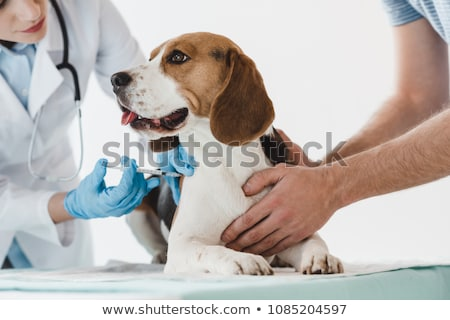 Vaccination for dog Stock photo © ivonnewierink