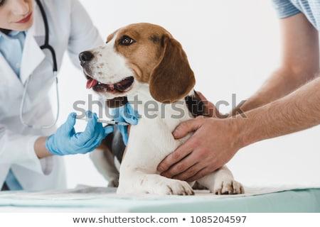 Szczepienia psa wstrzykiwań czarny ból opieki Zdjęcia stock © ivonnewierink