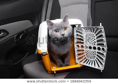 mascota · perro · gato · cuadro · azul · viaje - foto stock © shutswis